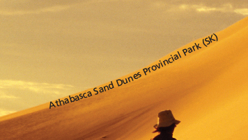 Athabasca Sand Dunes Provincial Park Microprint