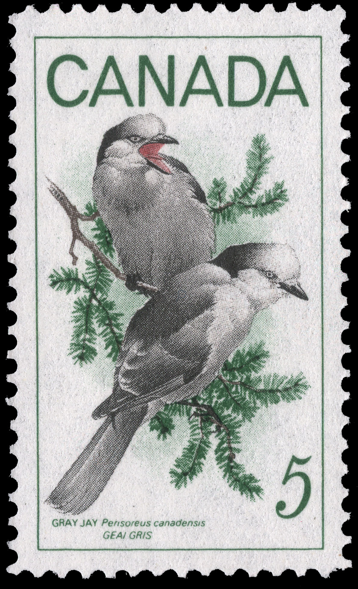 Gray Jay, Perisoreus canadensis Canada Postage Stamp