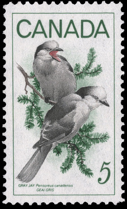 Gray Jay, Perisoreus canadensis Canada Postage Stamp | Birds