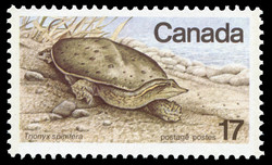 Eastern Spiny Soft-shelled Turtle, Trionyx spinifera Canada Postage Stamp | Endangered Wildlife