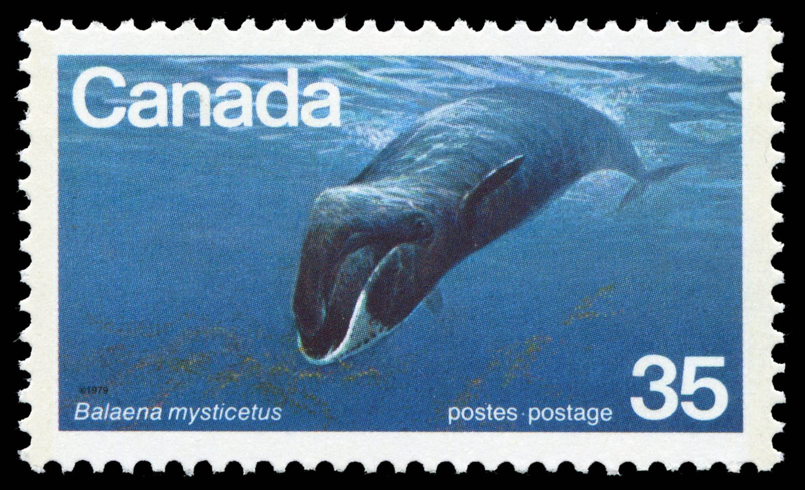 Bowhead Whale, Balaena mysticetus Canada Postage Stamp