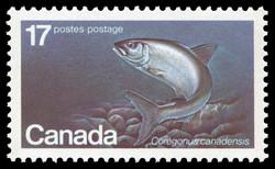 Atlantic Whitefish, Coregonus canadensis Canada Postage Stamp | Endangered Wildlife