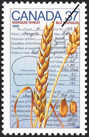 Marquis Wheat, 1909 Canada Postage Stamp
