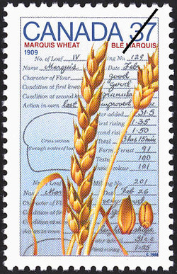 Marquis Wheat, 1909 Canada Postage Stamp | Canada Day - Science and Technology, Canadian Innovations in Energy, Food, Research and Medicine