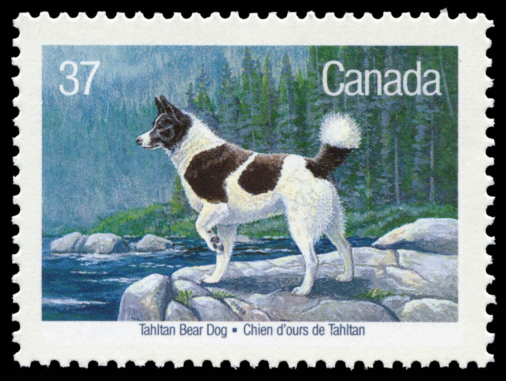 Tahltan Bear Dog Canada Postage Stamp