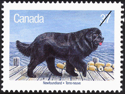 Newfoundland Canada Postage Stamp | Dogs of Canada