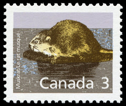 Muskrat Canada Postage Stamp | Small Canadian Mammals