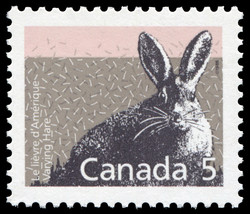 Varying Hare Canada Postage Stamp | Small Canadian Mammals