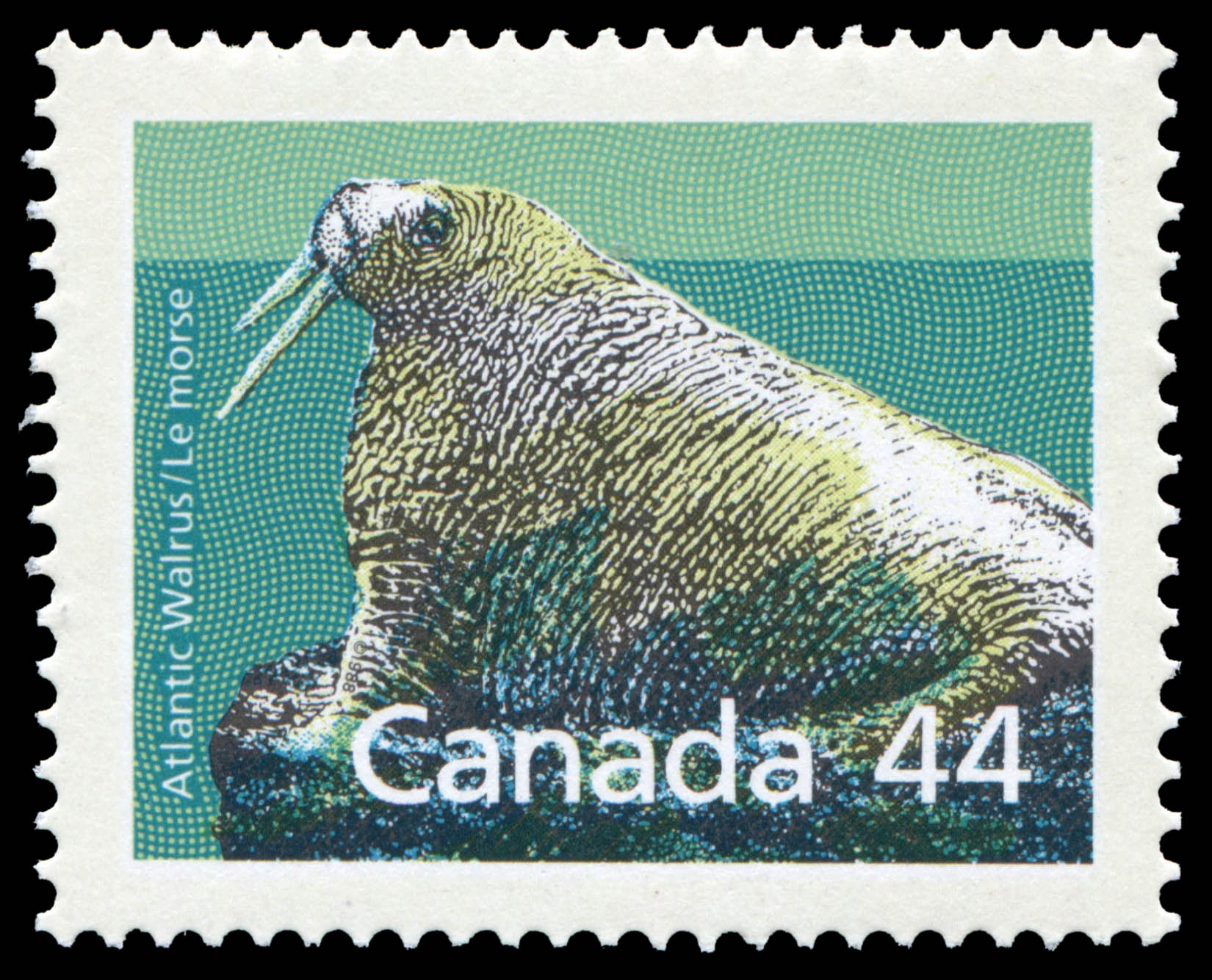 Atlantic Walrus Canada Postage Stamp | Canadian Mammals