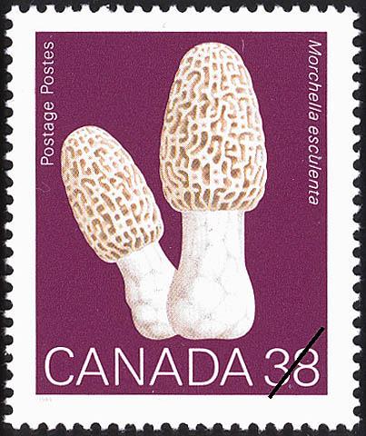 Morchella esculenta, Common Morel Canada Postage Stamp