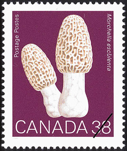 Morchella esculenta, Common Morel Canada Postage Stamp | Mushrooms