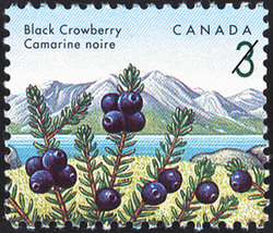 Black Crowberry Canada Postage Stamp | Edible Berries