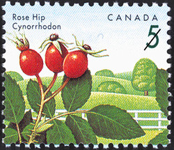 Rose Hip Canada Postage Stamp | Edible Berries