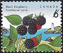 Black Raspberry Canada Postage Stamp | Edible Berries