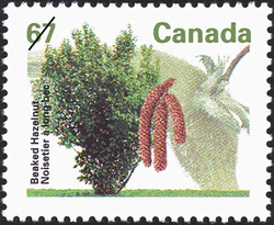 Beaked Hazelnut Canada Postage Stamp | Fruit Trees