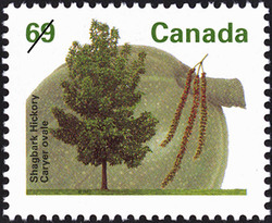 Shagbark Hickory Canada Postage Stamp | Fruit Trees