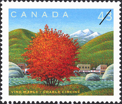 Vine Maple Canada Postage Stamp