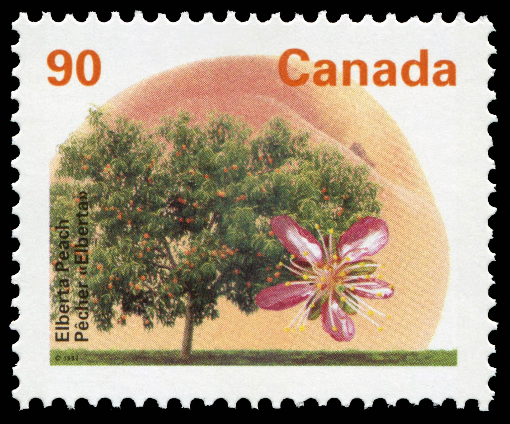 Elberta Peach Canada Postage Stamp