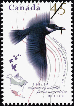 Belted Kingfisher Canada Postage Stamp | Migratory Wildlife, Canada-Mexico