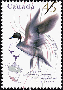 Northern Pintail Canada Postage Stamp | Migratory Wildlife, Canada-Mexico
