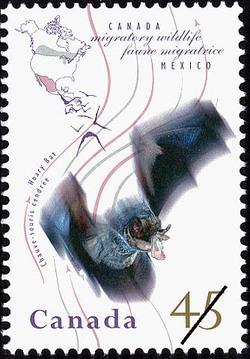 Hoary Bat Canada Postage Stamp | Migratory Wildlife, Canada-Mexico