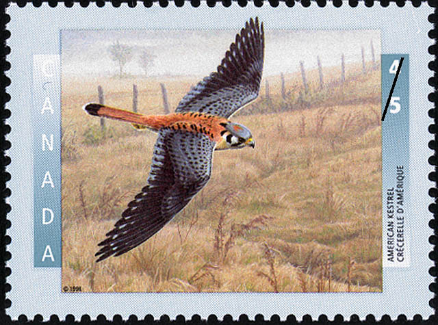 American Kestrel Canada Postage Stamp | Birds of Canada