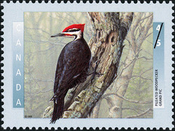 Pileated Woodpecker Canada Postage Stamp | Birds of Canada
