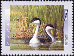 Western Grebe Canada Postage Stamp | Birds of Canada