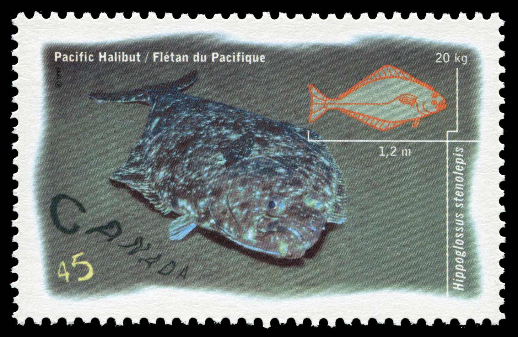 Pacific Halibut - Hippoglossus Stenolepis Canada Postage Stamp | Ocean Water Fish