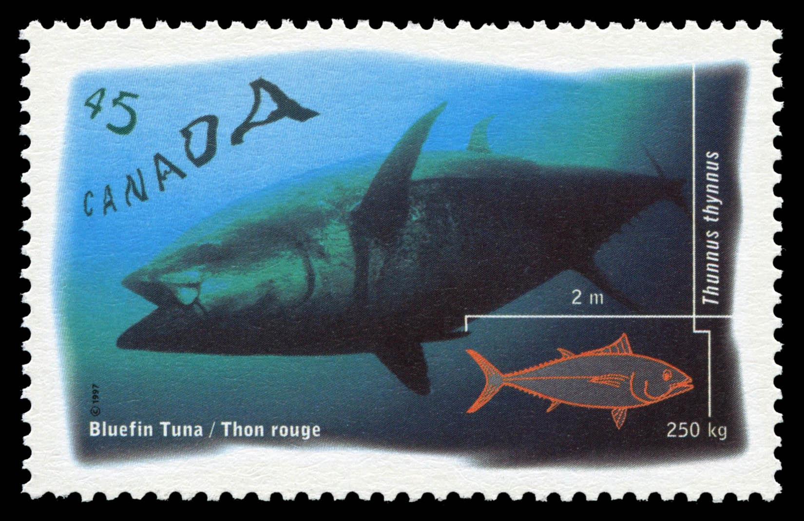 Bluefin Tuna - Thunnus Thynnus Canada Postage Stamp | Ocean Water Fish