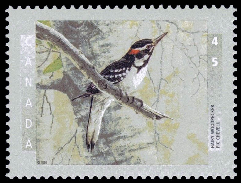 Hairy Woodpecker Canada Postage Stamp