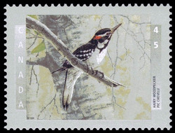 Hairy Woodpecker Canada Postage Stamp | Birds of Canada