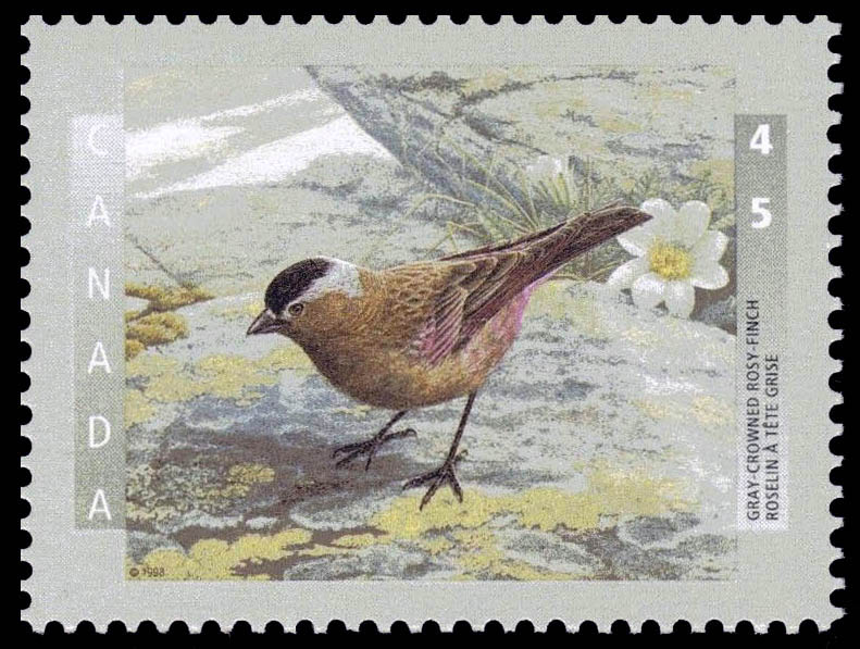 Gray-Crowned Rosy-Finch Canada Postage Stamp