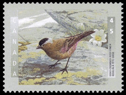 Gray-Crowned Rosy-Finch Canada Postage Stamp | Birds of Canada