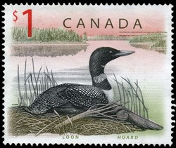 Common Loon Canada Postage Stamp | Canadian Wildlife
