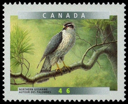 Northern Goshawk (Accipiter gentilis) Canada Postage Stamp | Birds of Canada