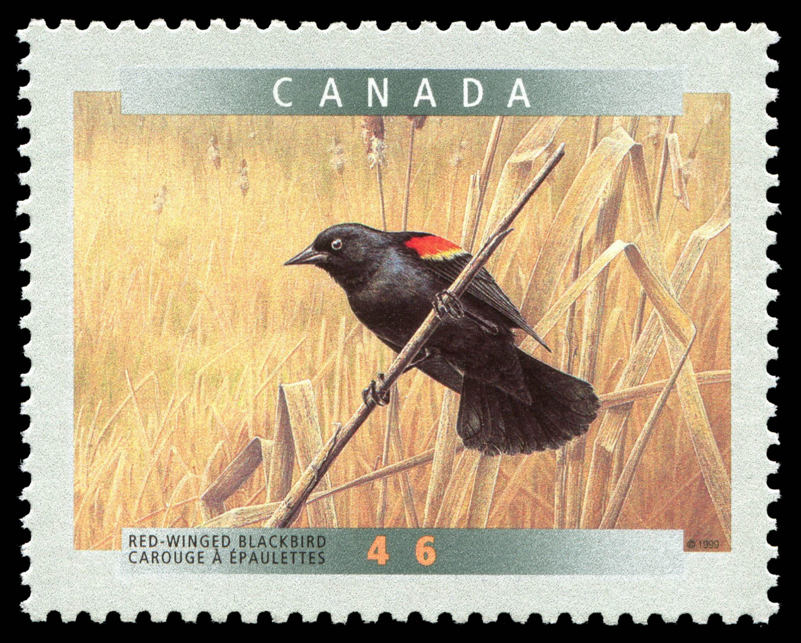 Red-winged Blackbird (Agelaius Phoenicus) Canada Postage Stamp | Birds of Canada
