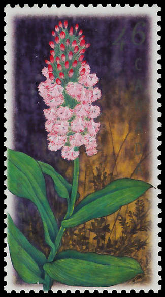 Small Purple Fringed Orchid, Platanthera psycodes Canada Postage Stamp | Orchids of Canada