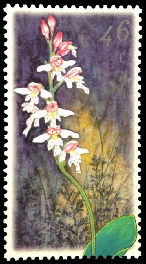 Small Round-Leaved Orchid, Amerorchis rotundifolia Canada Postage Stamp | Orchids of Canada