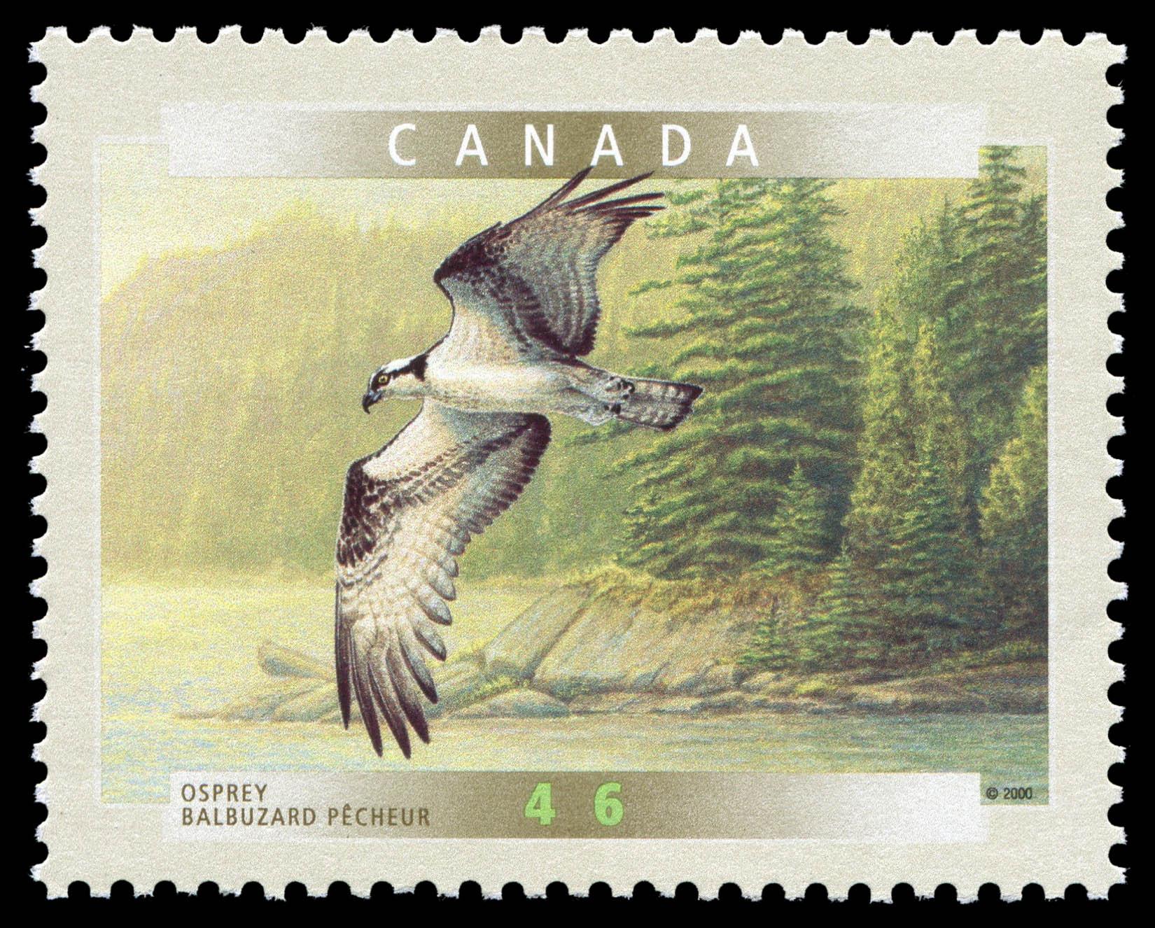 Osprey Canada Postage Stamp   Birds of Canada