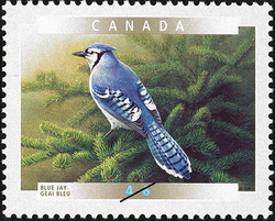Blue Jay Canada Postage Stamp | Birds of Canada