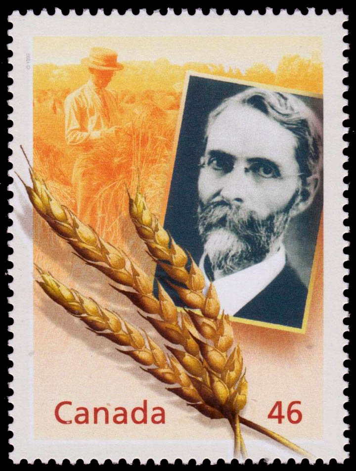 Sir Charles Saunders: The Marquis of Wheat Canada Postage Stamp | The Millennium Collection, Food, Glorious Food!