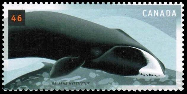 Bowhead, Balaena mysticetus Canada Postage Stamp | Whales