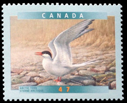 Arctic Tern Canada Postage Stamp | Birds of Canada