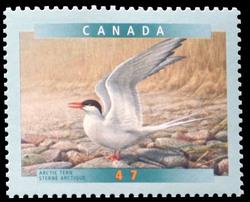 Arctic Tern Canada Postage Stamp | Birds of Canada