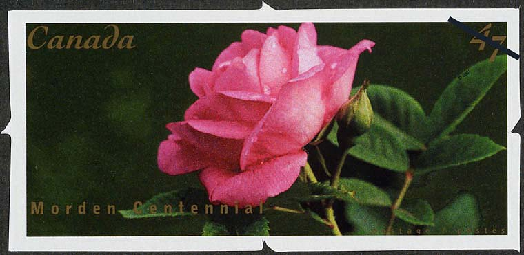 Morden Centennial Canada Postage Stamp | Roses