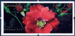 Champlain Canada Postage Stamp | Roses