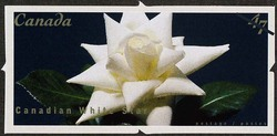 Canadian White Star Canada Postage Stamp | Roses