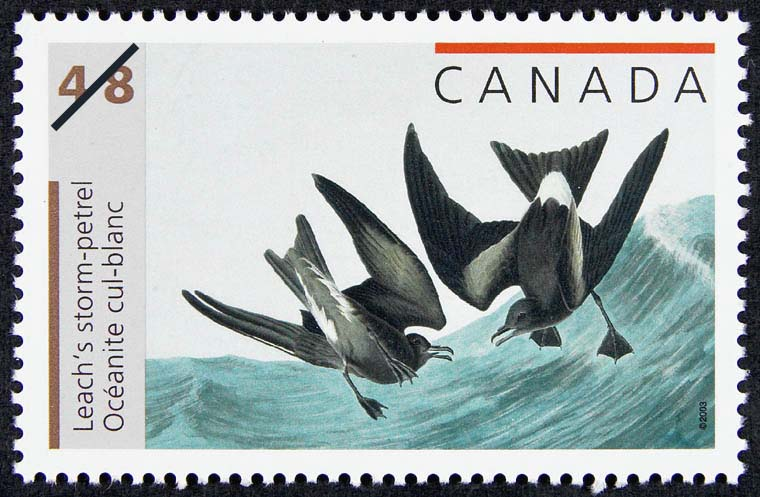 Leach's storm-petrel Canada Postage Stamp | John James Audubon's Birds