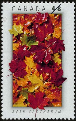 Acer saccharum (Maple Tree)  Postage Stamp